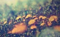 自然花卉平板桌面壁纸
