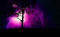 树影人星空图片壁纸大全