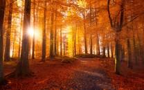 森林景色唯美壁�