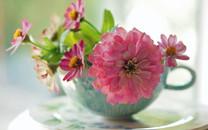 唯美花卉锁屏壁纸