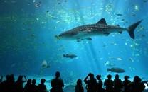 蓝色海洋鲸鱼图片壁纸大全