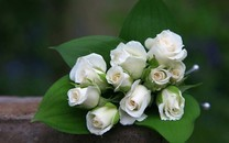 白色的花壁纸-白色花朵图片大全