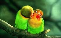 漂亮可爱的鹦鹉图片壁纸2