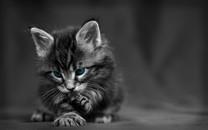 简约猫的黑白图片壁纸