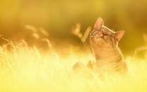 太阳色温暖的壁纸图片大全