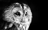 高清鸟类黑白图片大全