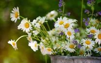 花卉摄影高清壁纸图集