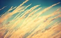 摄影秋天田野收麦子唯美背景图片壁纸2