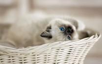 精选可爱的白色猫咪图片壁纸2