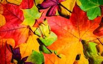 秋天的树叶唯美壁纸