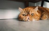 精选可爱的黄色猫咪图片壁纸