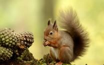 森林里的可爱松鼠桌面壁纸