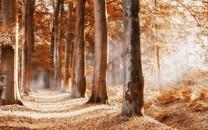 高清晰唯美深林風景圖片壁紙
