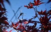 秋天的天空桌面壁纸