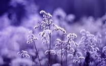 朦胧的花朵唯美意境图片壁纸