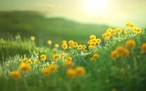 唯美小清新草地和花花圖片壁紙