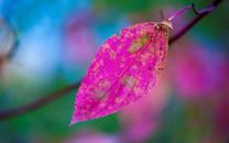 唯美红叶风景高清壁纸