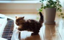 乖巧可爱的小猫咪图片壁纸