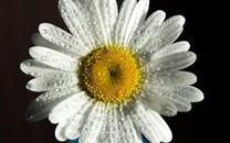 盛开的花唯美高清图片壁纸