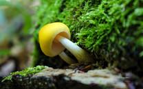 山野间的小蘑菇桌面壁纸