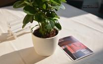 办公桌小盆栽桌面壁纸