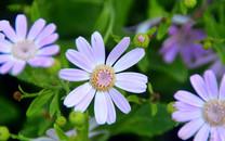 春风十里鲜花摄影桌面壁纸