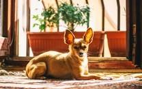 可爱小狗高清图片壁纸