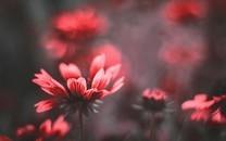 高清鲜花大图图片壁纸