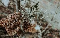 颓废植物风格图片壁纸