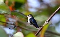 树枝上的小鸟图片壁纸