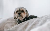 毛茸茸的狗狗图片壁纸2