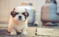 精选可爱呆萌的小狗图片壁纸2