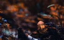 精选野生蘑菇图片壁纸