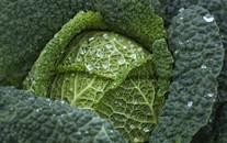 水果蔬菜高清图片壁纸