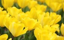 好看的小黄花高清图片壁纸