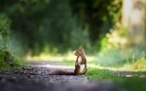 森林里可爱小松鼠图片壁纸