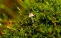 漂亮的真菌小蘑菇图片壁纸