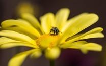 蜜蜂与花高清微距图片壁纸2