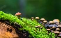精選唯美畫風野生蘑菇圖片壁紙