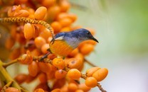 可爱的小鸟儿大自然动物壁纸