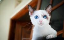 高清萌寵小貓咪圖片壁紙