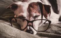 趴着睡觉的狗狗图片壁纸