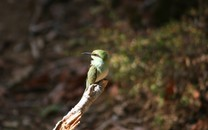 可爱的小鸟儿大自然动物壁纸2