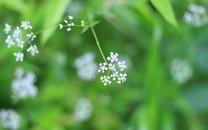 小草唯美意境高清圖片壁紙