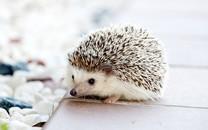 可爱的小动物图片壁纸