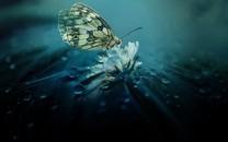 梦幻蝴蝶桌面背景图片壁纸