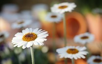 唯美意境朦胧花朵图片壁纸2