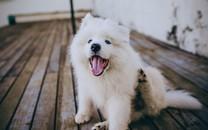 精选可爱呆萌的小狗图片壁纸