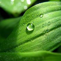 清新护眼绿色植物iPad壁纸