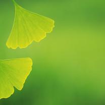 树叶图片-绿色叶子图片壁纸大全